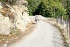 مرگ در جاده بخش مرکزی کلیجانرستاق ساری خط و نشان میکشد