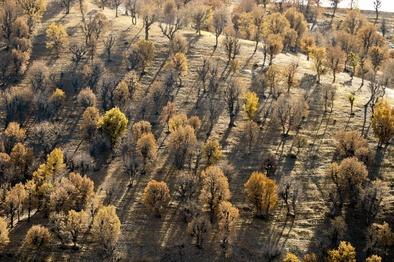 نابودی جنگلهای زاگرس حیات انسان را به خطر میاندازد