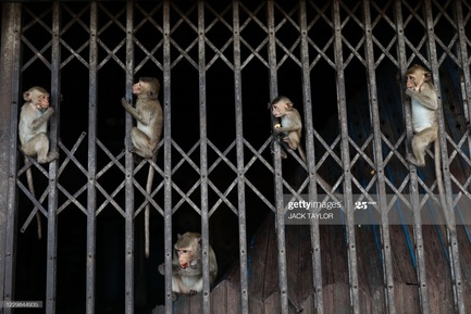 gettyimages-1229844935-2048x2048