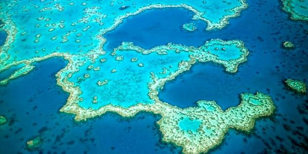 10,480 sharks killed on Great Barrier Reef drumlines since 2001