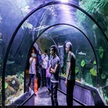 Iran's biggest aquarium tunnel opens in Anzali port