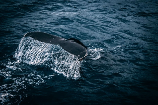 Panama Canal Reveals Speed Limits to Protect Whales