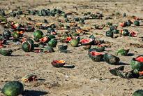خسارات سیل به عشایر بورک شهرستان نیکشهر