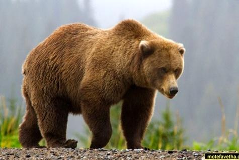 موانع جادهای یک خرس را کشت