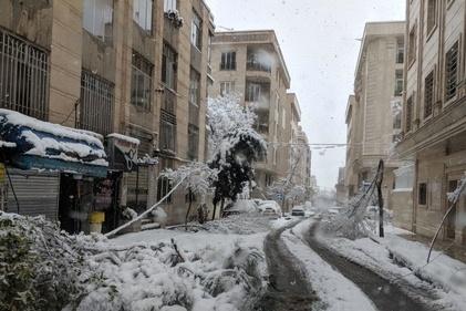 (تصاویر) برف کمر درختان تهران را شکست