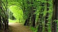 جنگلهای هیرکانی ایران ثبت جهانی شد