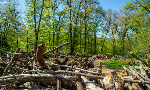 جنگل خواری در مازندران