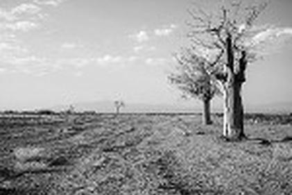 گزارش تصویری / بحران آب و خشکسالی در استان اصفهان