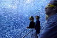 عکس/ سفر دریایی مجازی در عکس روز نشنال جئوگرافیک