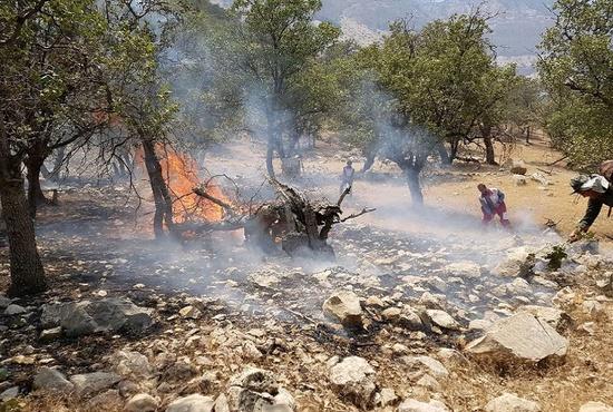 فیلم | فرار حیوانات از ترس آتش سوزی در منطقه خائیز