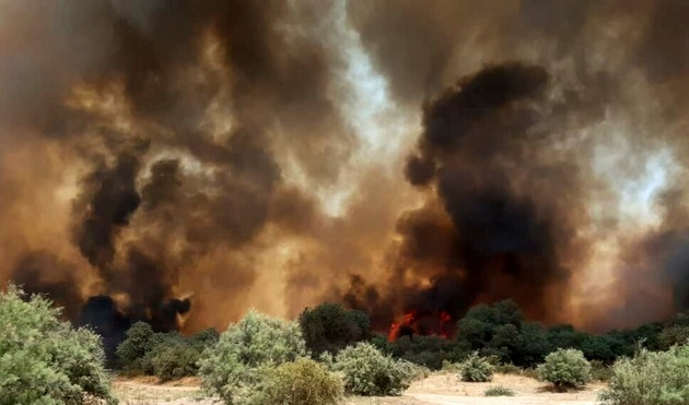 ۵۰ هزار اصله درخت و نهال جنگل کرخه در آتش سوخت