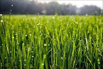 توصیههای هواشناسی کشاورزی تا ۴ آذر ماه به تفکیک استان