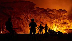 نیم میلیارد گونه جانوری و گیاهی در جنگلهای استرالیا سوختند